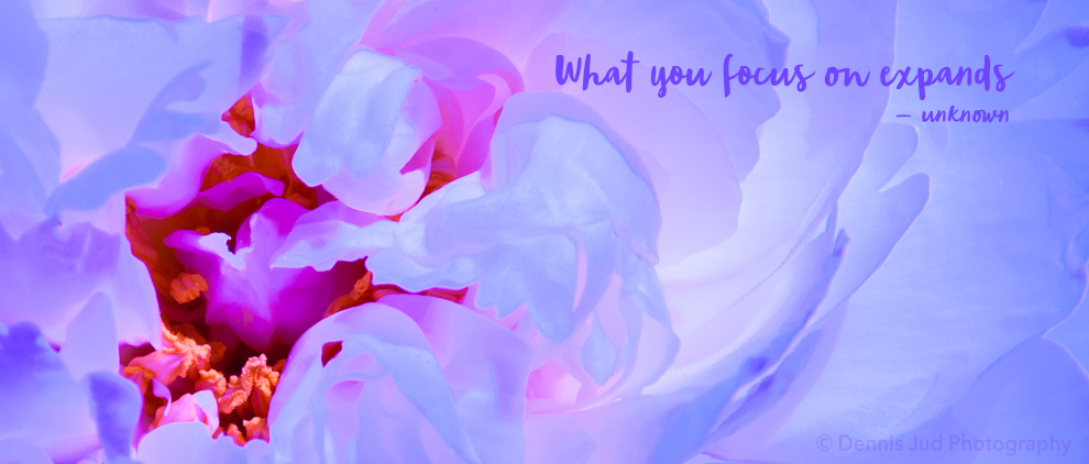 Purple Flower with Text_2
