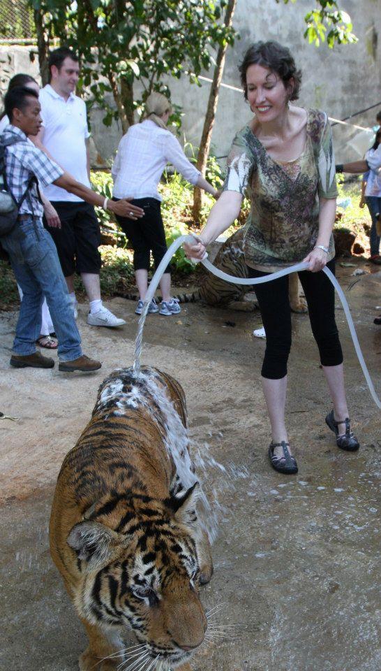 Ann washing a tiger in Thailand